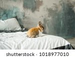 cute domestic rabbit on bed in... | Shutterstock . vector #1018977010