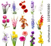 Collection Beautiful Flowers Assorted Delphinium - Fine Art prints