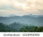 landscape  green fresh nature... | Shutterstock . vector #1018996900