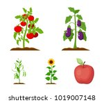 eggplant  tomato  sunflower and ... | Shutterstock .eps vector #1019007148