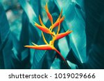 colorful exotic flower blooming ... | Shutterstock . vector #1019029666