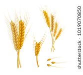 wheat agriculture farm fresh... | Shutterstock .eps vector #1019070850