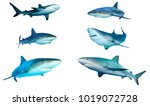 sharks cutout on white.... | Shutterstock . vector #1019072728