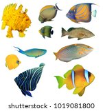 collection fish cutouts.... | Shutterstock . vector #1019081800