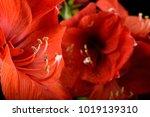 big red flower | Shutterstock . vector #1019139310