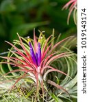 Small photo of Close up group tillandsia air plant.