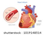 illustration of arterial... | Shutterstock .eps vector #1019148514