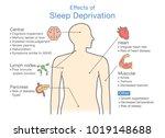 diagram of effects of sleep... | Shutterstock .eps vector #1019148688