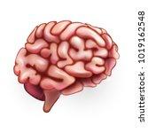 human brain. illustration... | Shutterstock .eps vector #1019162548