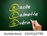 bcg   bacillus calmette guerin... | Shutterstock . vector #1019163790