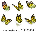 beautiful six monarch...   Shutterstock . vector #1019163934