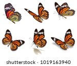 Stock photo beautiful six monarch butterflies set isolated on white background 1019163940