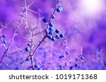 Autumn Blackthorn Berries Art...