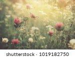 gentle natural floral...   Shutterstock . vector #1019182750