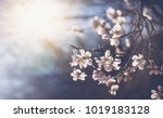 beautiful spring floral... | Shutterstock . vector #1019183128