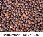 dried coffee cherries. | Shutterstock . vector #1019213689