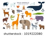 the large set of wild animals... | Shutterstock .eps vector #1019222080