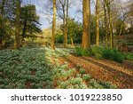 early spring snowdrops ... | Shutterstock . vector #1019223850