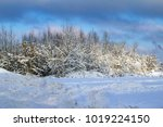 a picture of snow grass and... | Shutterstock . vector #1019224150