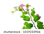 pink flower isolated on white... | Shutterstock . vector #1019233966