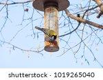 great tit on bird feeder on... | Shutterstock . vector #1019265040