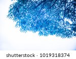 blue tree blue sky | Shutterstock . vector #1019318374