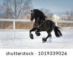Black Friesian Horse With The...