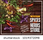 spice and herb poster of... | Shutterstock .eps vector #1019372098