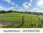 blue sky and green fields  in...   Shutterstock . vector #1019403700