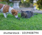 a dog a cat and a rat  on a...   Shutterstock . vector #1019408794