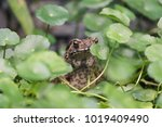 Toad Sits In The Grass