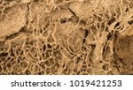close up  termite nests  | Shutterstock . vector #1019421253