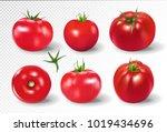 tomato set. pink salad tomato... | Shutterstock .eps vector #1019434696