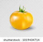 yellow tomato. realistic vector ... | Shutterstock .eps vector #1019434714