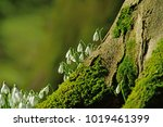 a group of early spring... | Shutterstock . vector #1019461399