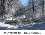 large tree and storm damage... | Shutterstock . vector #1019480020