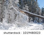 huge tree causing damage on the ... | Shutterstock . vector #1019480023