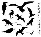 vector collection of bird... | Shutterstock .eps vector #1019488390