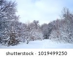 winter landscape with trees... | Shutterstock . vector #1019499250