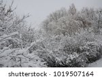 winter landscape with snow   Shutterstock . vector #1019507164