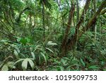 brazilian amazon forest | Shutterstock . vector #1019509753