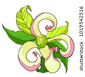 the  florida dogwood flower... | Shutterstock .eps vector #1019542516