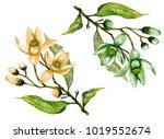 twigs of fruit tree in blossom. ... | Shutterstock . vector #1019552674