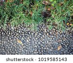 pebble paving ground texture... | Shutterstock . vector #1019585143