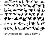 Vector Silhouettes Of Storks ...