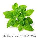 Fresh Peppermint Isolated On...