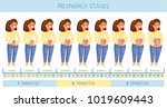 cute pregnant woman. the stages ... | Shutterstock .eps vector #1019609443