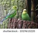 Two Green Budgerigars Sit On A...
