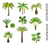 Tropical Palm Trees Set. Exotic ...