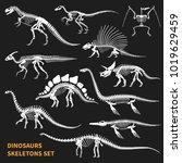 dinosaurs skeletons isolated...   Shutterstock .eps vector #1019629459